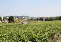 Ancient Vineyard in auxerre