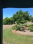 Orchards, Tropical Fruit World