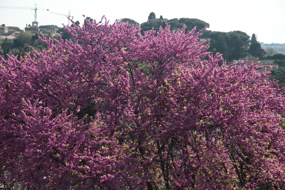 Shrubs blooming on the Hill