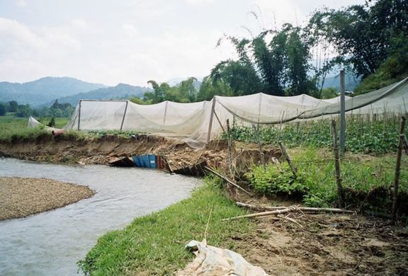 Rabbi & Mawan's Cabbage farm; levelled by the flood