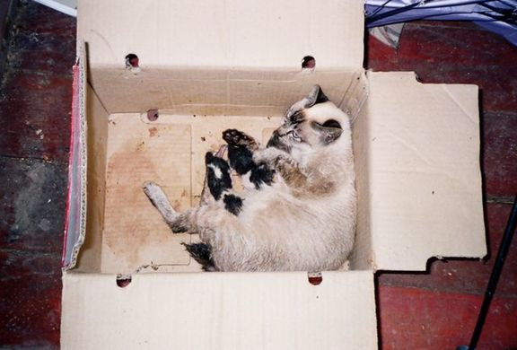 MohQ's cat Mimi with kittens