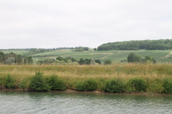 Vines along the Marne River