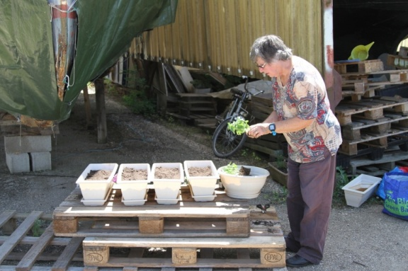 Penny planting the geraniums and herbs