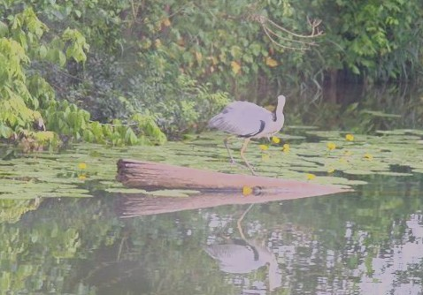 A heron on the bank
